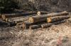 Черные лесорубы, наворовавшие леса в Приангарье более чем на 2 миллиона, предстанут перед судом