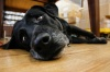 «Собачий» законопроект объединил партии Ленобласти
