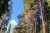 Российские леса могут поставить на кадастровый учет