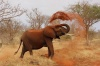 Смертельное ДТП с диким слоном произошло в Таиланде
