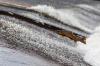 ОНФ будет отстаивать получение именных разрешений на вылов рыбы