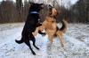 Уголовное дело о погибшем от зубов бельгийского пса ребенке дошло до суда