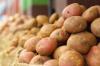 Власти Ленобласти рассказали о картофельном неурожае