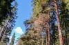 Семейная чета из Забайкалья попалась на организации вырубки леса