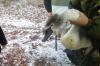 Сотрудники нацпарка «Башкирия» спасли четырех лебедей