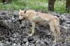 Бездомных животных будут стерилизовать, выгуливать и чипировать на Сахалине