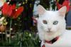 Полмиллиона за глухонемого кота просят во Владивостоке