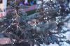 Лесничества Ленобласти бесплатно раздают живые ели для Нового года