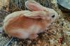 Алкоголик из Астрахани похитил у детей кролика, но не смог его ни продать, ни съесть