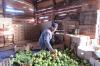 На Кубани под мигрантов создали целое управление