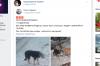 В Пущино спасли собаку, четверо суток бегавшую с банкой на голове
