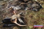 Застрелил прямо в сердце: свердловский охотник принял человека за лося