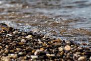 В Ленобласти приступили к рейдам на берегах незаконно захваченных рек и озер