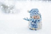 Выпавший снег погубил посевы в Бурятии. Аграрии подчитывают убытки
