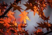 «Осень – самое время для спорта, общения и уборки дома»