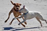 Мэрия Нижнего Тагила отделалась пятью тысячами за стаю свирепых бродячих собак, напавших на ребенка