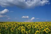 «Русагро» объявил о покупке контрольного пакета акций «Солнечных продуктов»