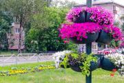Общественники Новосибирска обсудили досуг, благоустройство и безопасность