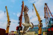 Никто, кроме Кожемяко. Как уход мэра Владивостока отразится на политической жизни Приморья