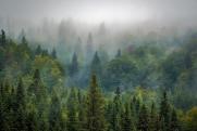 ОНФ будет добиваться появления «зеленых щитов» во всех регионах страны