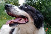 «Собака в первую очередь – хищник!» В Прикамье наведут порядок с отловом животных