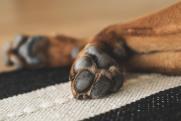 «Груды мертвых собак». Как Салехарду предлагают бороться с полчищами диких псов