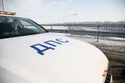 В Ульяновской области водитель слетел в кювет, сбив лося