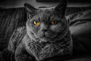Ученые выяснили, как выглядели домашние коты древних людей