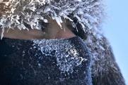 «Поверье, что горячительные напитки в холода согревают, – обман»