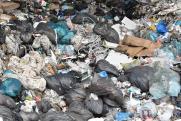 «На Байкале в мусоре нередко находили туши собак, свиней, коров, и сейчас будет то же самое»