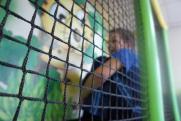 Пермский депутат Лисняк призвал ужесточить наказание «за бессердечность к ребенку»