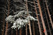 «Надо понять, кто сегодня спекулирует на лесе». Глава Федерального агентства лесного хозяйства в Екатеринбурге анонсировал масштабную ревизию арендаторов
