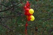 «Ради безопасности животных». В Дзержинске хотят отказаться от массового запуска воздушных шаров