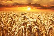 Московская биржа обнаружила пропажу зерна на элеваторах