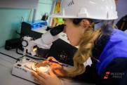 «Наш бизнес не анализирует рынок и не защищает проекты». В кузбасских ТОСЭР не хватает местных резидентов