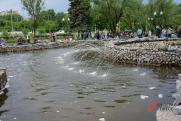 Российских десантников призвали не лезть в фонтаны, где купаются собаки