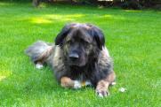 Милонов предложил МВД создать спецслужбу по защите прав животных