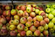 Запрещенные китайские фрукты в России заменят кубанскими