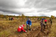 В нацпарке «Русский Север» Вологодской области высажено более 20 тысяч сосен