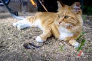 Новосибирский следком будет расследовать убийство кота