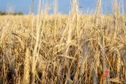 В девяти районах Кировской области обьявлен режим ЧС
