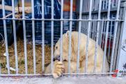 Путин ужесточил наказание для охотников на редких животных