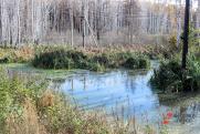 Неизвестные прорвали «живой щит» защитников болота Кучино в Новосибирске