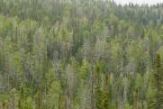 «Дело Шеверды напугало чиновников: боязнь ответственности доведет до экологической катастрофы»