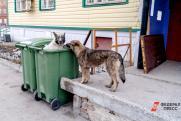 «Местные власти не могут кардинально повлиять на ситуацию с бездомными собаками. Скоро все станет еще хуже»