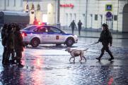 Пес-пограничник и юный герой из Петербурга – в рубрике «ФедералПресс» «Дайджест добра»