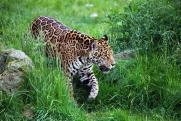 Национальный парк «Земля леопарда» – в рубрике «ФедералПресс» «Я живу в России»