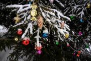 Главную елку Новосибирска откроют через четыре дня