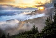 Новосибирские ученые смогут предсказывать развитие лесных пожаров