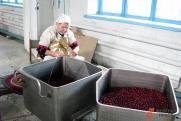 Югорские ягоды планируют продавать на AliExpress